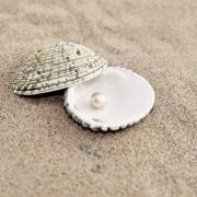 Море, песок ракушки