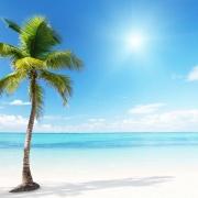 море пальмы песок